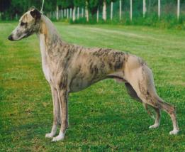 wolf-tone-viking