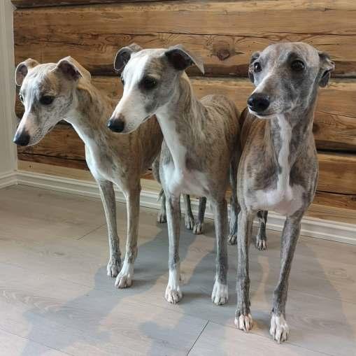 Pippi, Rime og Tessa_3