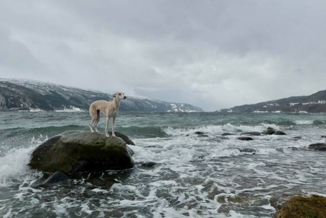 Tippi by the ocean