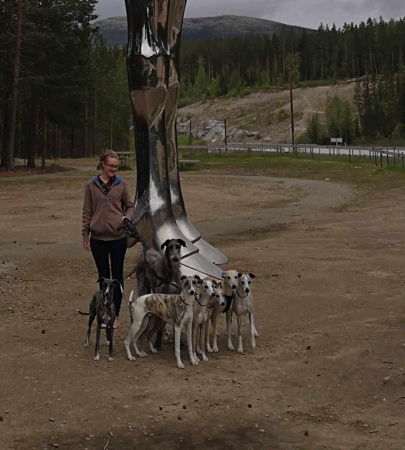 Tina, hundene og elgen